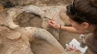 Archeologia nel nostro territorio